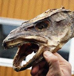 Salt fish head for Salt fish head