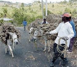 Kellits Clarendon Jamaika